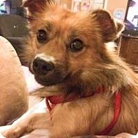 Adopt A Pet :: Leroy - Beavercreek, OH