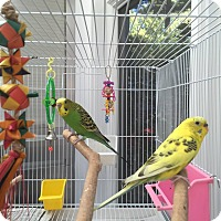 Adopt A Pet :: Lemon and Lime - Stratford, CT