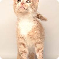 Adopt A Pet :: Klaus - Wyandotte, MI