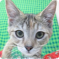 Adopt A Pet :: Blizzard - Lloydminster, AB