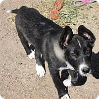 Adopt A Pet :: Jackie - Manhattan, KS