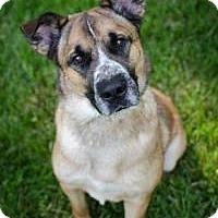 Adopt A Pet :: Kramer - Dublin, OH