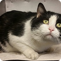 Adopt A Pet :: Checkers - Concord, OH