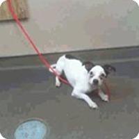 Adopt A Pet :: Panda - Las Vegas, NV