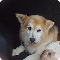 Adopt A Pet :: Simba - Summerville, SC