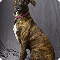 Adopt A Pet :: Jacklyn - Tulsa, OK