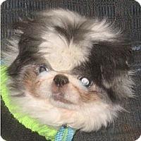 Adopt A Pet :: Panda-NJ - Mays Landing, NJ