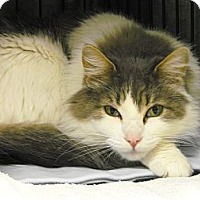 Adopt A Pet :: Nonis - Mission, BC
