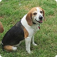 Adopt A Pet :: Peggy - Prairieville, LA