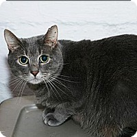 Adopt A Pet :: Sterling - Syracuse, NY