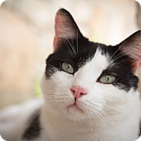 Adopt A Pet :: Jackson - San Antonio, TX