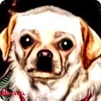 Adopt A Pet :: Athena-NY - Mays Landing, NJ