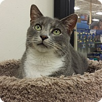 Adopt A Pet :: Joplin - Chesapeake, VA