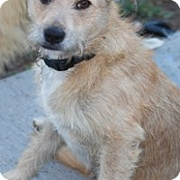 Adopt A Pet :: Leeland - Norwalk, CT