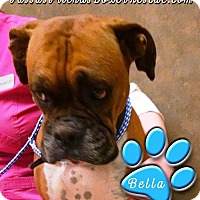Adopt A Pet :: Bella-Adopted! - Turnersville, NJ