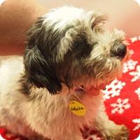 Adopt A Pet :: Natasha - Prole, IA