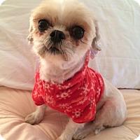 Adopt A Pet :: Penny - Long Beach, NY
