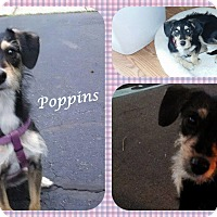 Adopt A Pet :: Poppins - DOVER, OH