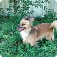 Adopt A Pet :: Gretchen - Shawnee Mission, KS