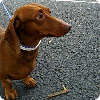 Adopt A Pet :: Joplin - Decatur, GA