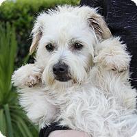 Adopt A Pet :: NOODLES - Newport Beach, CA