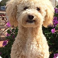 Adopt A Pet :: Nate - San Diego, CA