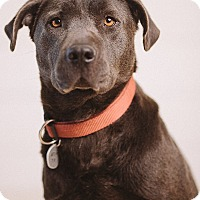 Adopt A Pet :: Justine - Portland, OR