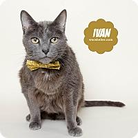 Adopt A Pet :: Ivan - Wyandotte, MI