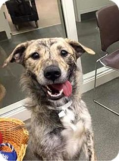Terrier (Unknown Type, Small)/Hound (Unknown Type) Mix Dog for adoption in Columbus, Ohio - Blondie
