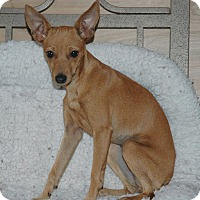 Adopt A Pet :: Emma - Lawrenceville, GA