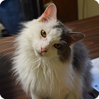 Adopt A Pet :: Matrix - Pottsville, PA