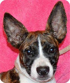 Boston Terrier Mix Dog for adoption in Mukwonago, Wisconsin - **QUINN** MEET OCT 22ND!
