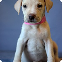 Adopt A Pet :: Dakota - Waldorf, MD