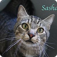 Adopt A Pet :: Sasha - Bradenton, FL