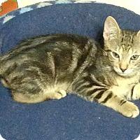 Adopt A Pet :: Jericho - Staten Island, NY