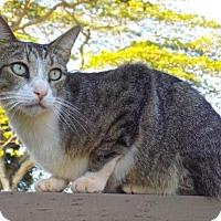 Adopt A Pet :: Tango - Sacramento, CA