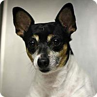 Adopt A Pet :: Buddy - Buchanan Dam, TX