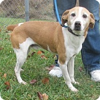 Adopt A Pet :: Robbie - Mount Sterling, KY