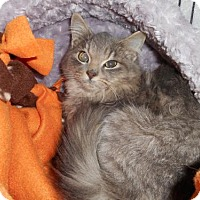 Adopt A Pet :: Lavendar - Livonia, MI