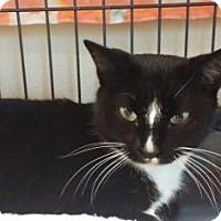 Adopt A Pet :: Baobei - Scottsdale, AZ