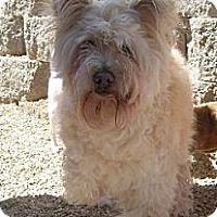 Adopt A Pet :: Ray Charles - Templeton, CA