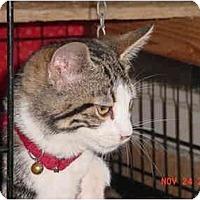 Adopt A Pet :: Koda - Pendleton, OR