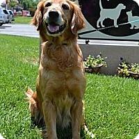 Adopt A Pet :: Jolene - Foster, RI