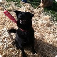 Adopt A Pet :: Molly - Council Bluffs, IA