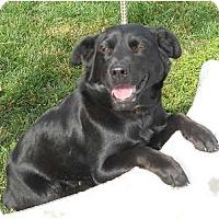 Adopt A Pet :: Katy - PENDING! - kennebunkport, ME