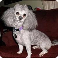 Adopt A Pet :: Jada - Mooy, AL