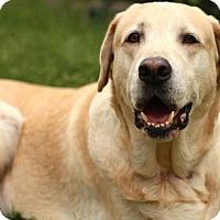 Adopt A Pet :: Chester - Sacramento, CA
