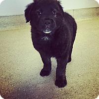 Adopt A Pet :: 1 - Scottsdale, AZ