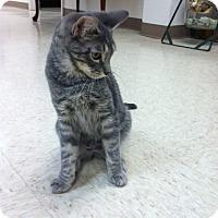 Adopt A Pet :: Beetle - Bensalem, PA