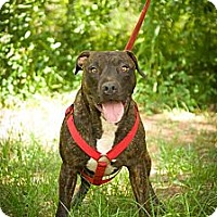 Adopt A Pet :: Ratchet - Fort Valley, GA